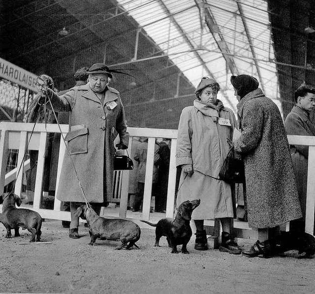 DOISNEAU-2065-Concours-de-chiens-PARIS-1953