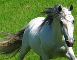 Fotos de Cavalos de Lilia Marcondes
