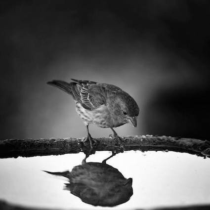3_1-птицы
