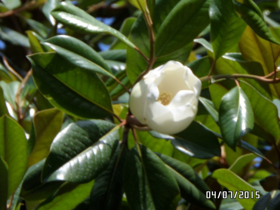 Цветы абхазии фото с названием