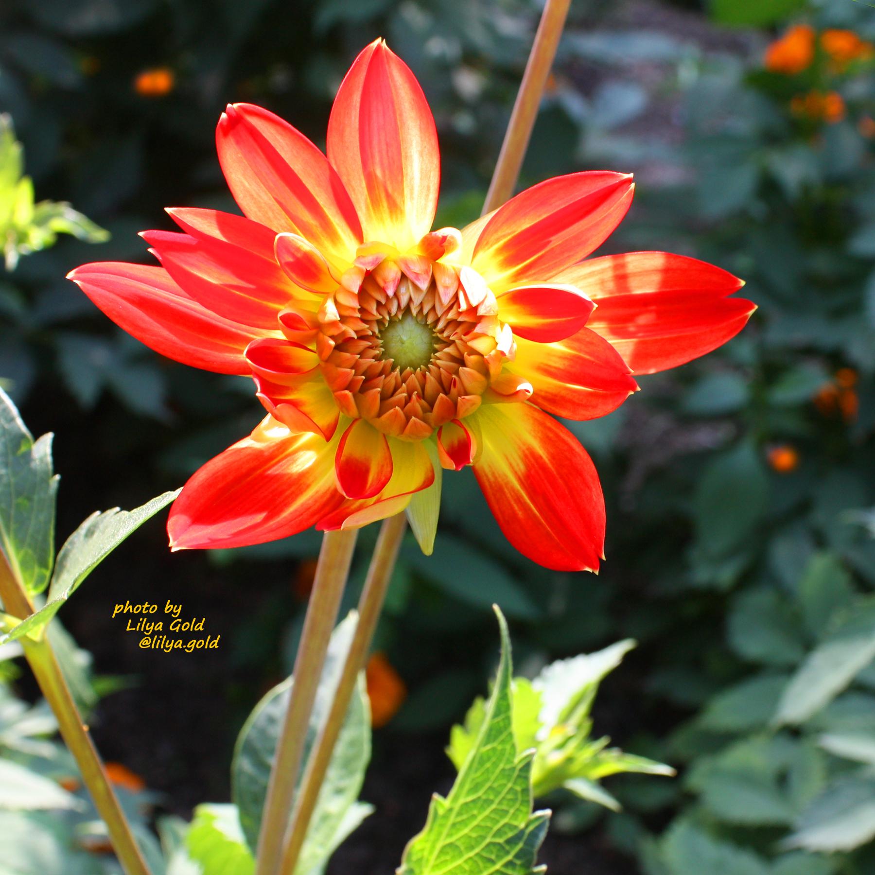 Lilya Gold_06.09.19_6.jpg