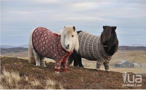 конь в пальто 3