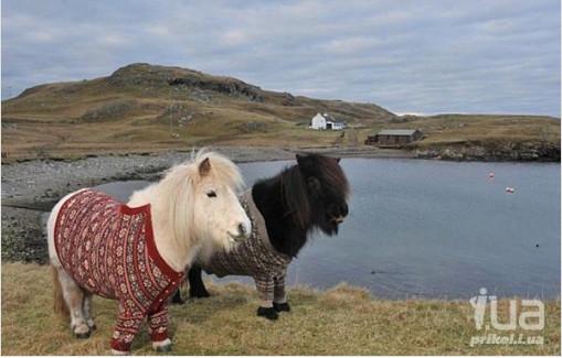 конь в пальто 2