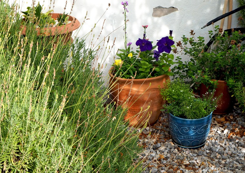 tiny garden in november