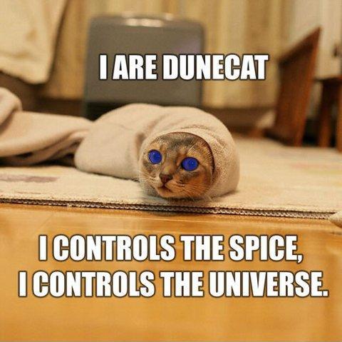Funny-Cat-Meme-18