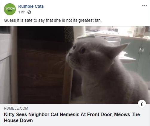 rumble cats