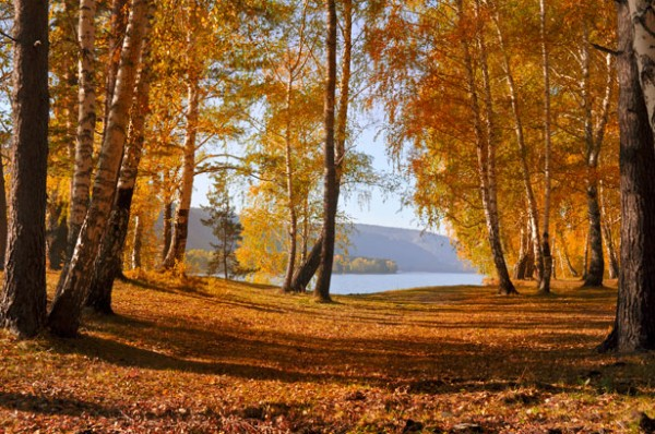 autumn-forest-1351265582Bf1