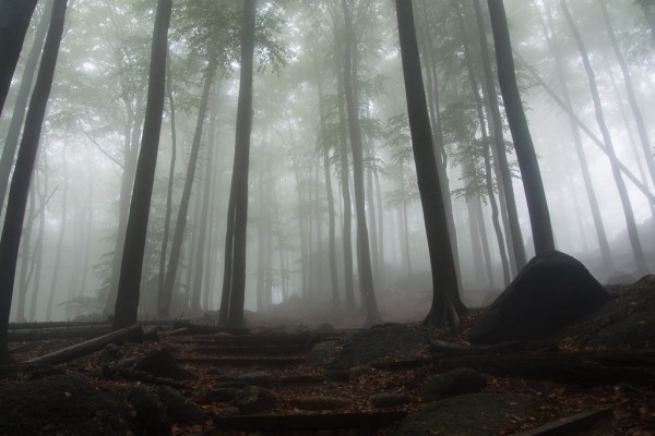 secret_path_in_the_mist_by_mirachravaia-d9dmxfv