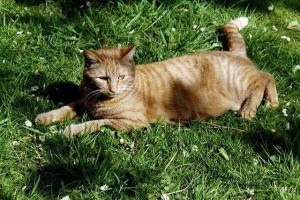 Leo in grass