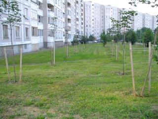 Достоинства и недостатки древесины разных пород для