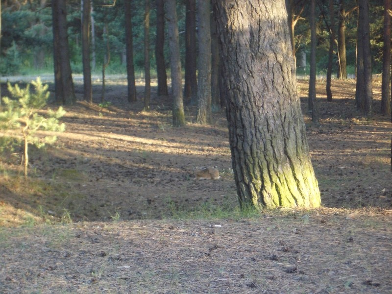 20100703 Hare