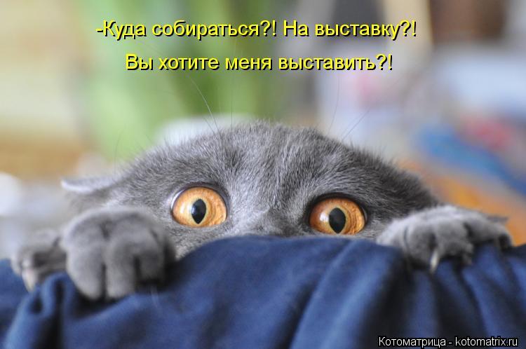 kotomatritsa_iW