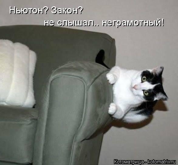 kotomatritsa_n