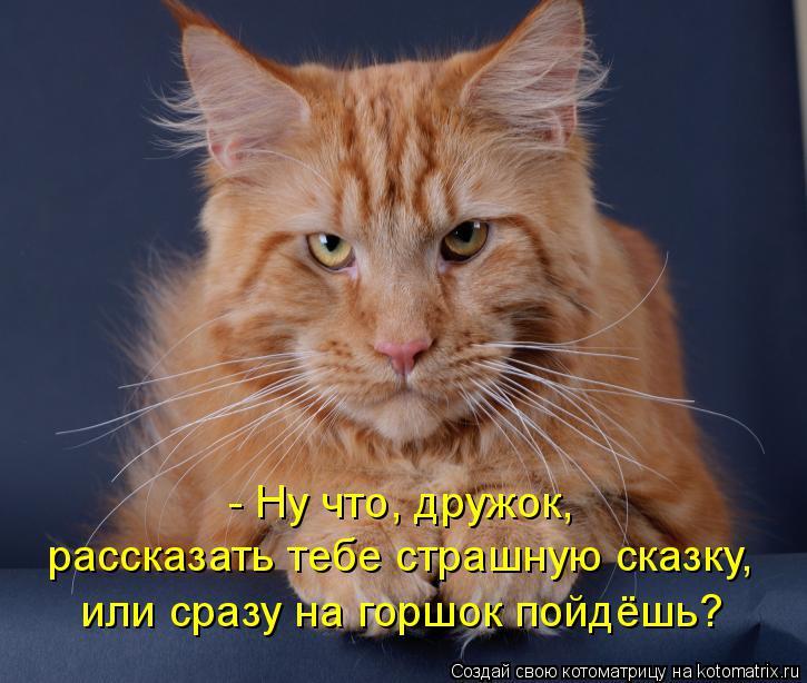 kotomatritsa_SO