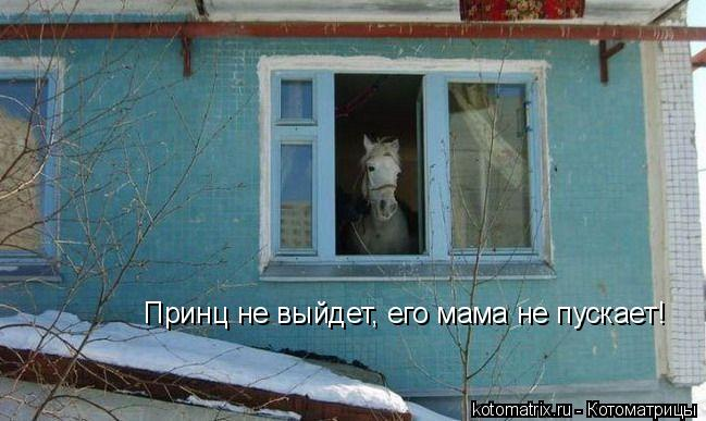kotomatritsa_i