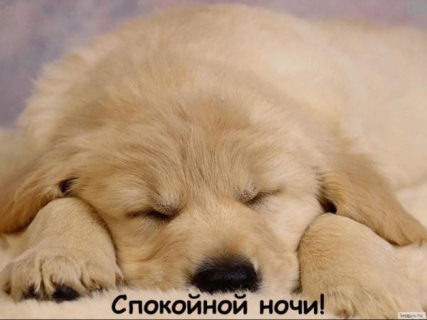 1357319627_kartinki_spokoynoy_nochi_649-12