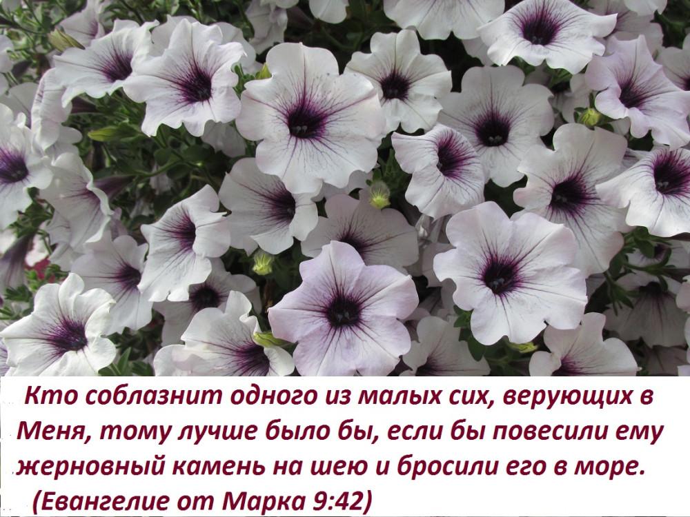 IMG_2243