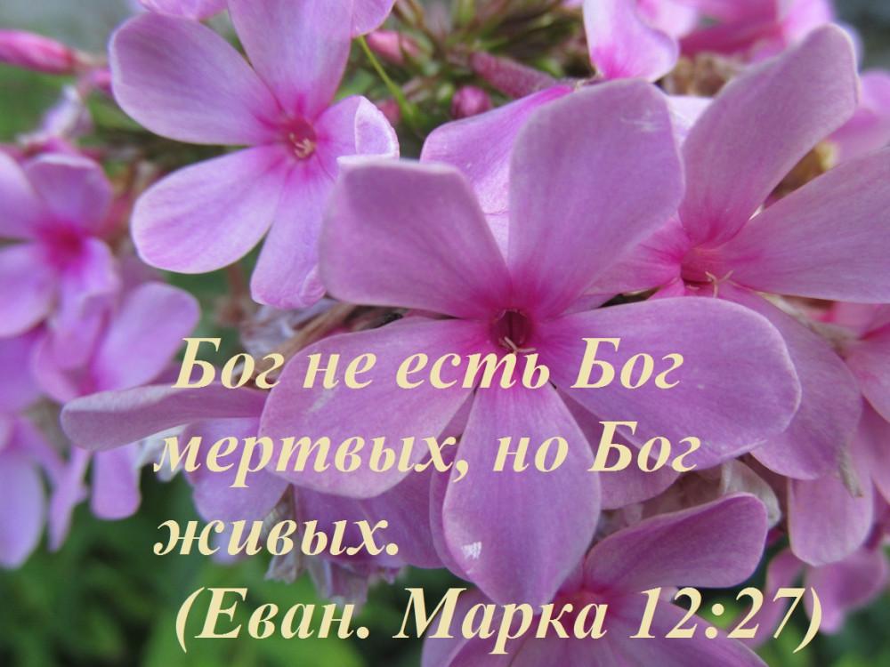 IMG_2977