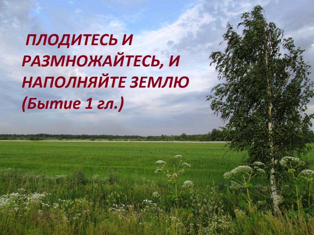 IMG_8686 - копия