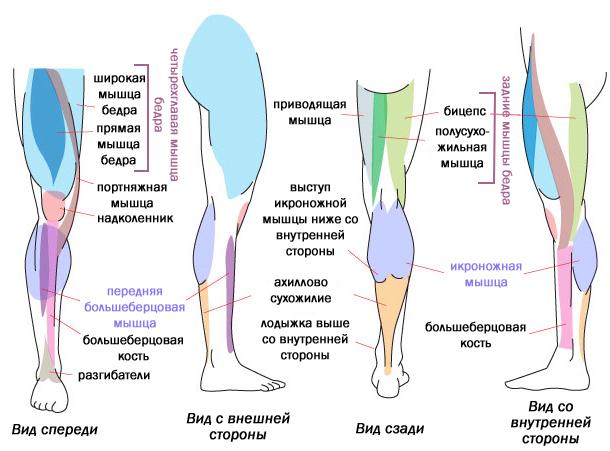 Болит голень ниже колена спереди как лечить