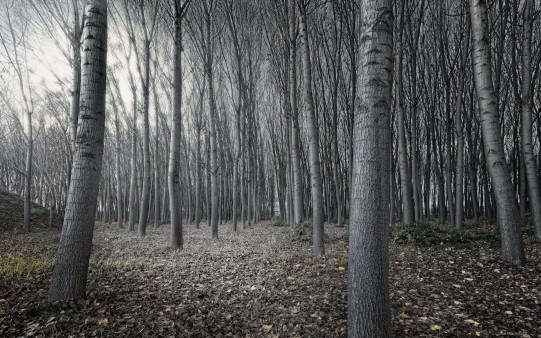 Голый лес