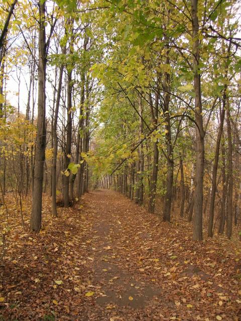 Нескучный сал. Осенняя аллея