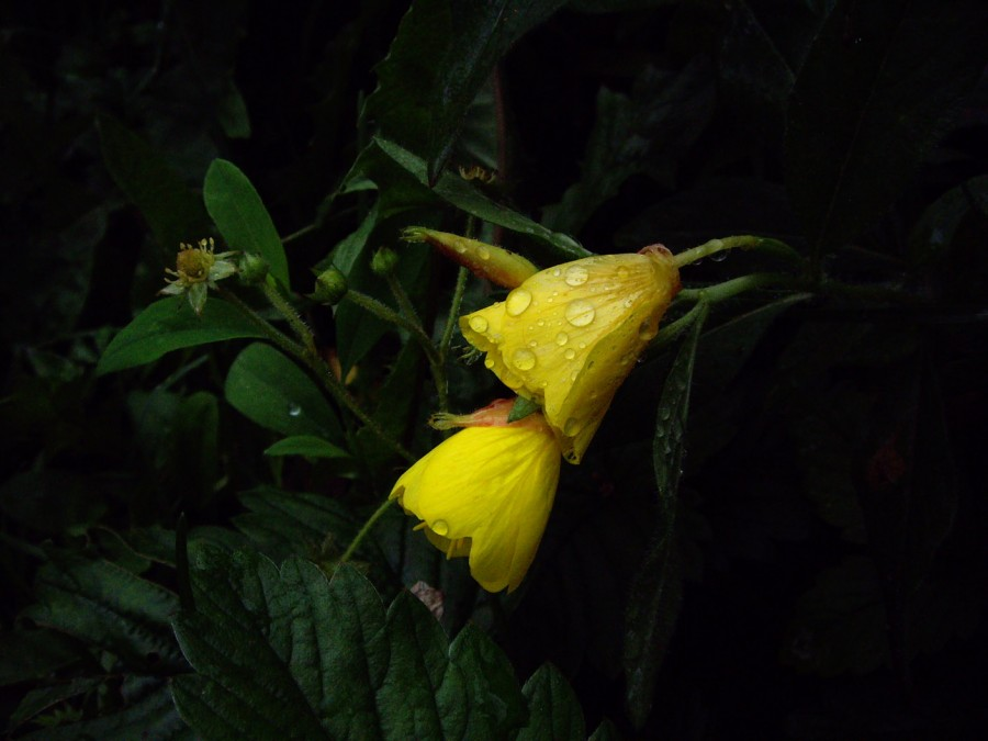Таинственные желтые цветы