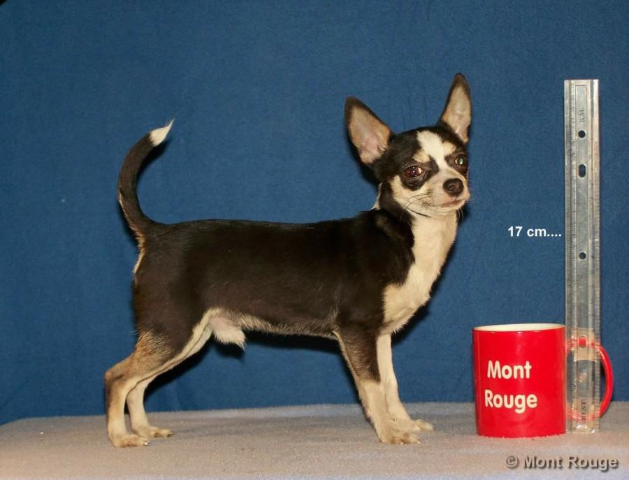 Покупаю щенка в Мексике...  249982_900