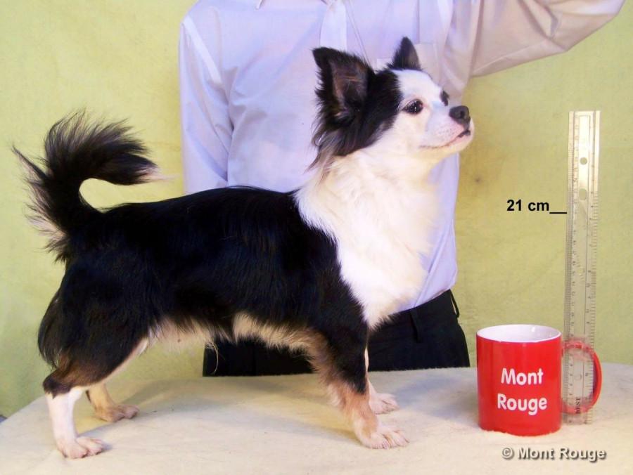 Покупаю щенка в Мексике...  251563_900