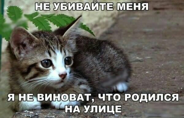 Не убивай!