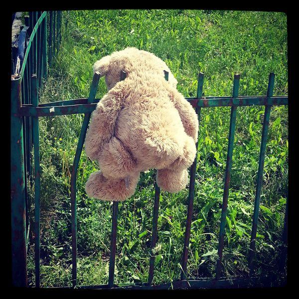 ведмедь