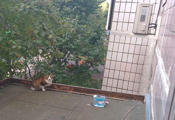 кошка на крыше