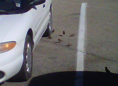 Birdies attacked my car at a rest area.