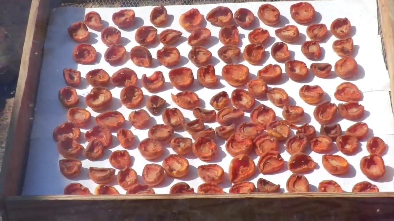 Когда абрикосы на две трети готовы, то переносим противни в тенёк, где они доготавливаются.