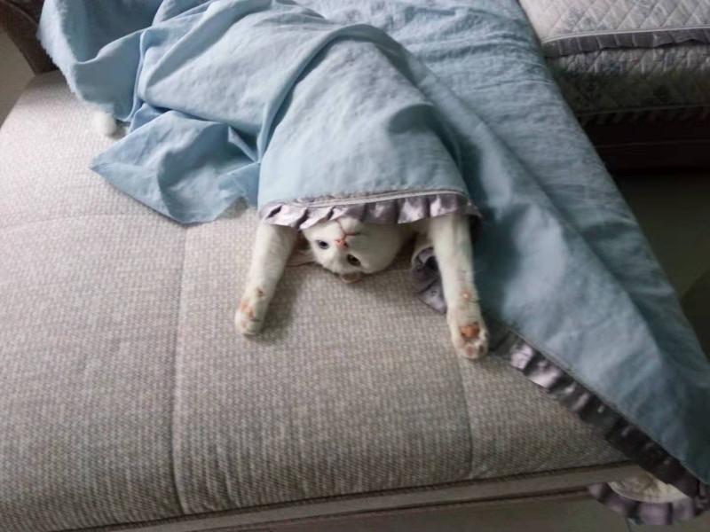 Яша и диван
