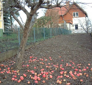 Pretty apples