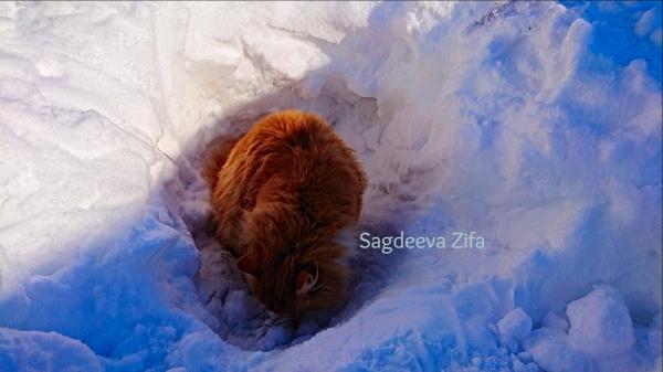 Кот Малыш 5.png