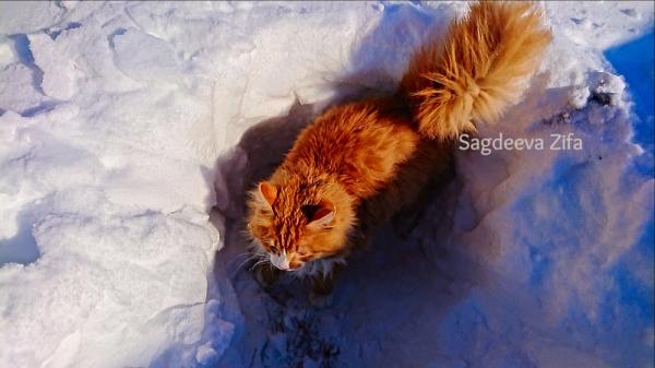 Кот Малыш 3.png