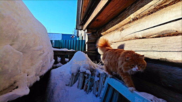 Тем временем, коту Малышу исполнился год!)