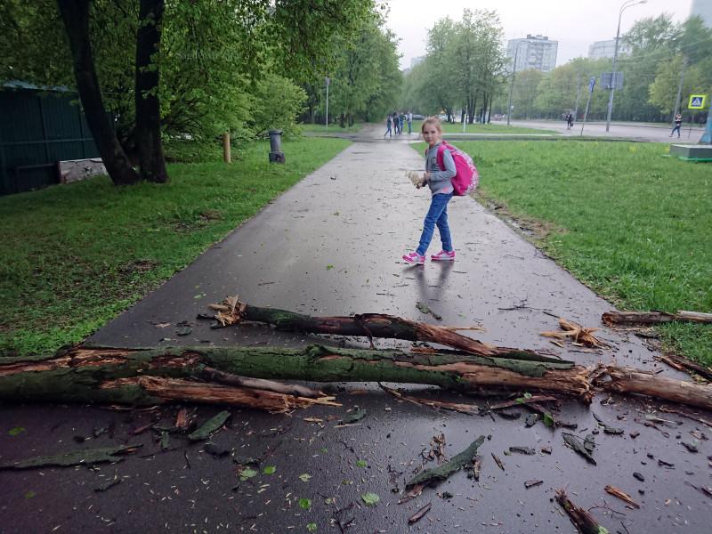 Москва весенние звёздочки 09.05.19.jpg