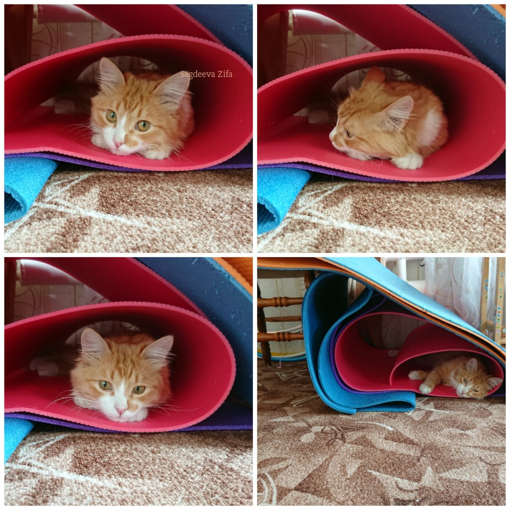 Кот Малыш.jpg