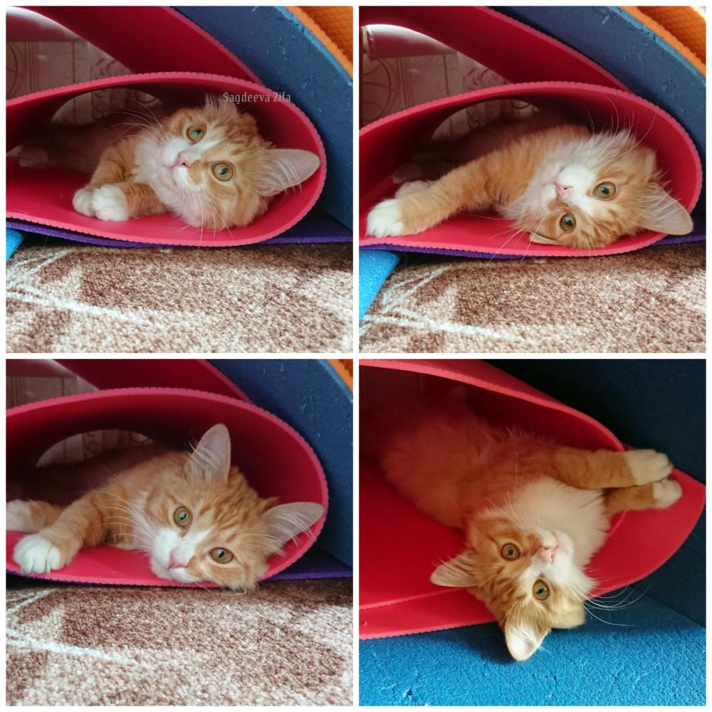 Кот Малыш 1.jpg