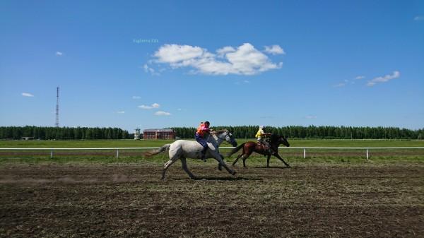 Сабантуй 2019 Нурлат Татарстан конные скачки 3.jpg