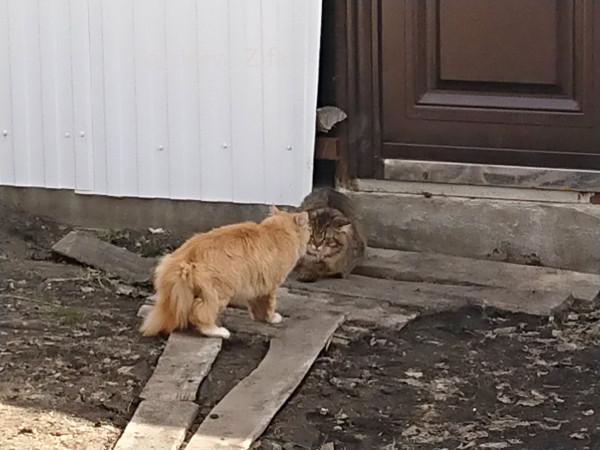 Кот Малыш 7.jpg
