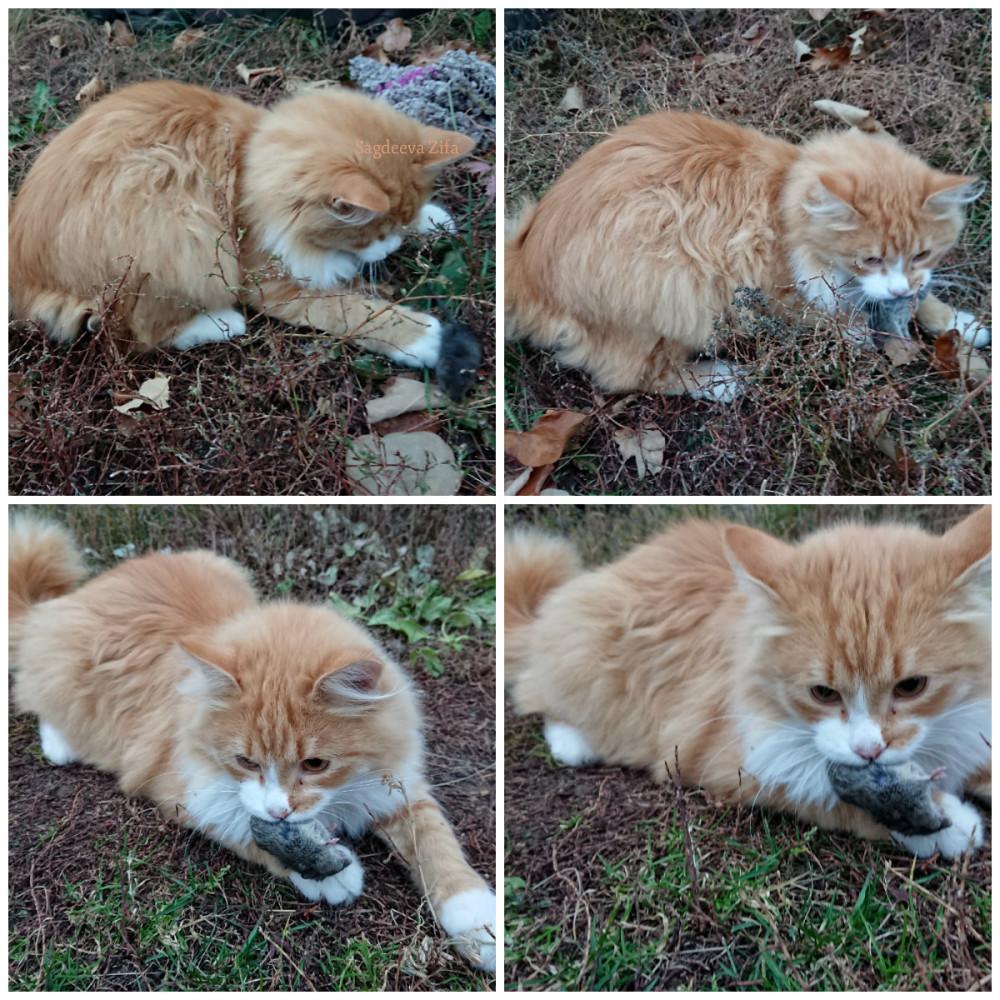 Кот Малыш 14.jpg