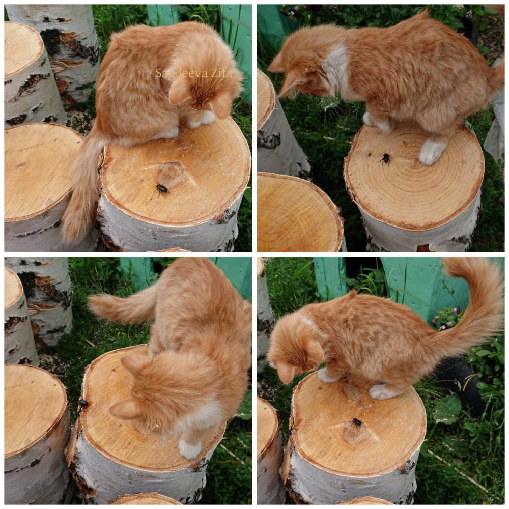 Кот Малыш 12.jpg