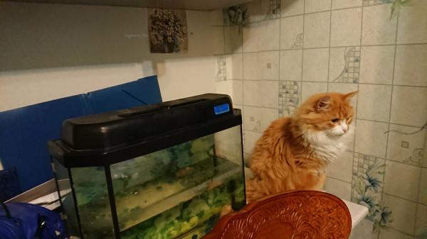 Кот Малыш 15.jpg