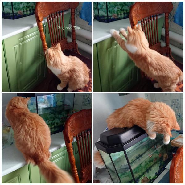 Кот Малыш 17.jpg