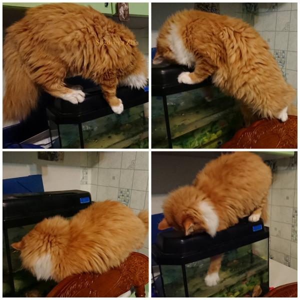 Кот Малыш 18.jpg