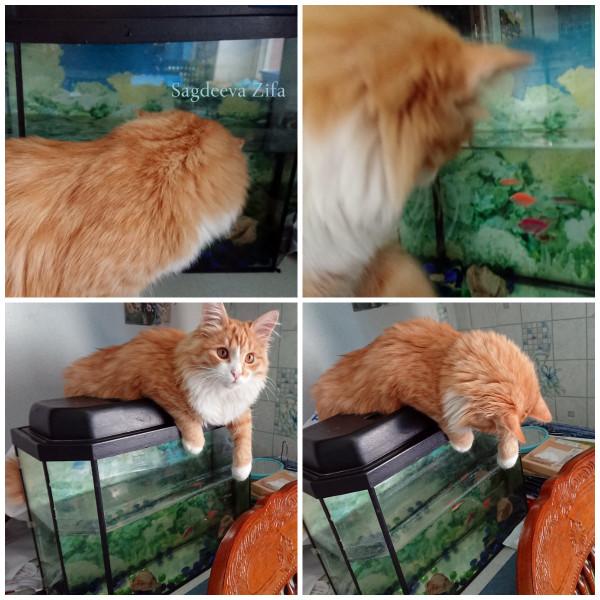 Кот Малыш 16.jpg
